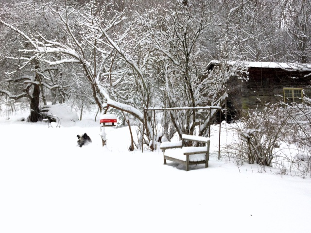 Chance is dashing full speed ahead, answering my call, just a black blur to the left of the red topped bird feeder.  You can see one of the giant snow capped boulders under the apple tree and the chicken barn.